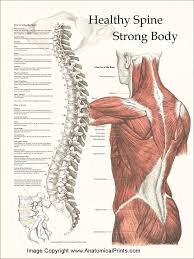 Body and Spine